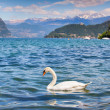 White swan on Lake Iseo — Stock Photo #50884937