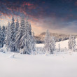 Winter in the mountains — Stock Photo #50884985