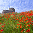 Genoese fortress with a field of blooming poppies — Stock Photo #50885265