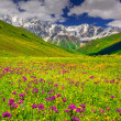 Alpine meadows in the Caucasus mountains. — Stock Photo #50886559