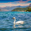 White swan on Lake Iseo — Stock Photo #50886901