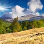 Autumn in the Carpathian mountains — Stock Photo #50886943