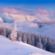 Christmas tree covered with snow in mountains — Stock Photo #50887323