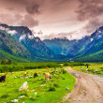 Beautiful view of alpine pasture. — Stock Photo #50887737