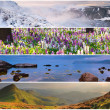Set of the 4 seasons landscape — Stock Photo #50887849