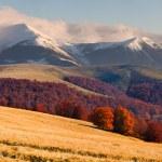 paisaje de otoño en las montañas de los Cárpatos — Foto de Stock   #50888011