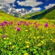 Alpine meadows in the Caucasus mountains. — Stock Photo #50888055