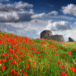 Genoese fortress with a field of blooming poppies — Stock Photo #50888421