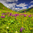 Alpine meadows in the Caucasus mountains. — Stock Photo #50889453