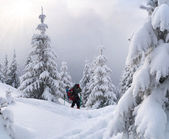 Hiker on the winter Carpathian mountains — Stock Photo