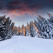 Dramatic winter landscape in the mountains — Stockfoto
