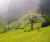 Jabłoń w górach — Zdjęcie stockowe