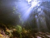Rays of the sun through the fog — Stock Photo