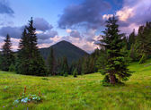Krajobraz lato w górach. — Zdjęcie stockowe