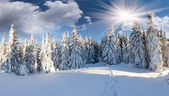 Zima v lese — Stock fotografie