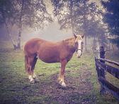 Horse in foggy forest — Stok fotoğraf