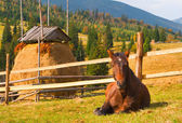 Horse in the Carpathian mountains — Stockfoto