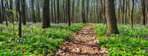 Panorama of the spring forest.  — 图库照片