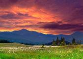 Dağlarda yaz dramatik peyzaj. — Stok fotoğraf