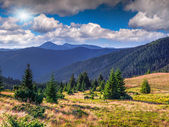 летний пейзаж в карпатских горах — Стоковое фото