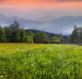 Beautiful summer morning in mountains — Stock Photo
