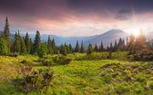 Paisaje de verano en las montañas — Foto de Stock