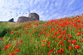 Genoese fortress with a field of blooming poppies — Stock Photo