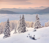 Winter morning in the mountain — ストック写真