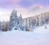 Trees covered with hoarfrost in mountains — Stock Photo