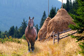 Horse and a haystack in the mountains — Stock Photo