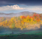 Foggy autumn in the mountains — Stock Photo