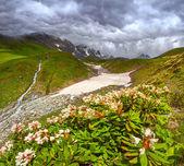 Alpine meadows in the Caucasus mountains. — Stock Photo