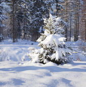 Zasněžené stromy — Stock fotografie