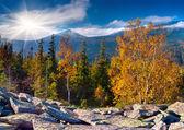 осенний пейзаж в горах. — Стоковое фото