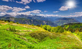 Blossom alpine meadows in the mountains — Stock Photo