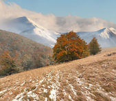 First snow in the mountains. — Stock Photo
