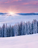 Sunrise among a sea of fog in the winter Carpathian — Stockfoto