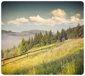 Paysage d'été dans les montagnes — Photo