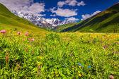 цветущие розовые цветы в горах. — Стоковое фото