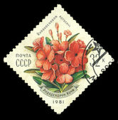 USSR stamp shows Rhododendron Kotschyi — Stock Photo