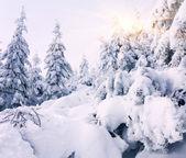 山の雪に覆われた木 — ストック写真