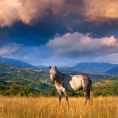 White horse in the mountains — Photo
