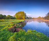 озеро в лесу летом. — Стоковое фото
