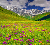 Alpine meadows in the Caucasus mountains. — Stock Photo