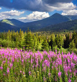 Mountains with pink flowers — Stock Photo