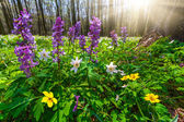 Meadow flowers in forest — Stock Photo