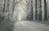 Forest road with first frost — Stock Photo