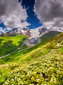 山脚下的 tetnuldi 冰川高山草甸 — 图库照片