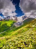 Prados alpinos ao pé da geleira de tetnuldi — Foto Stock
