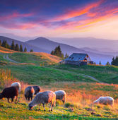 Autumn landscape in mountain village. — Stockfoto